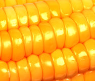 Closeup view of corn Royalty Free Stock Photo