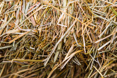 Closeup view of dry hay. Food for cattle Royalty Free Stock Images