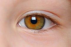 Closeup view of eye. Closeup view of a childish yellow green eye Royalty Free Stock Photos