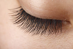 Eye lash Stock Photo