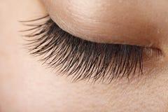Eye lash. Closeup view of eye lash of an Asian woman stock photo