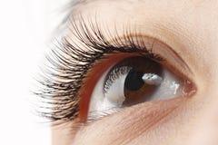 Eye lash. Closeup view of eye lash of an Asian woman royalty free stock photos