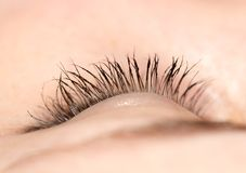 Closeup view of eye lashes. Photo in the studio Royalty Free Stock Photo