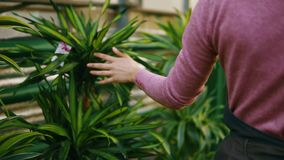 Closeup view of female hand touching leaves of different plants while walking among rows of flowers in flower shop or. Market stock video footage