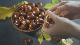 Closeup View Female Hands Cleaning Chestnut stock video footage