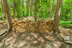 Closeup view of a fire woods neatly packed between the trees in woods, prepared for camp fire Royalty Free Stock Photos