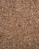 Closeup view of flix seeds Stock Images