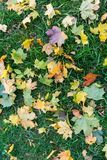 Grass loan with an autumn leaves on it. Royalty Free Stock Photos