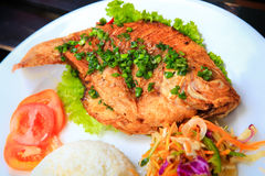 Closeup view of fried fish with rice vegetables Royalty Free Stock Images