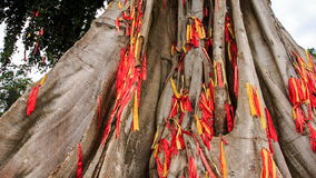 Closeup view of giant tree decorated with traditional red strips stock video