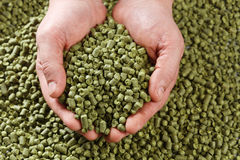 Closeup view of granule hop hopes. Ingredient for Industrial pro. Duction of beer. Background texture. Ideal for commercial. Backdrop image Stock Photo