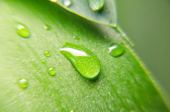 Closeup view of green leaf Royalty Free Stock Photography