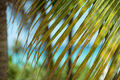 closeup view of green palm leaf and ocean backgrou Stock Image