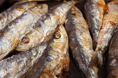 Closeup view of Grilled Sardine cooked in hot coals royalty free stock image
