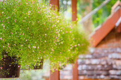 Closeup view of gypsophila flowers Royalty Free Stock Photos