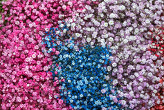 Closeup view of gypsophila flowers 2 Royalty Free Stock Photography