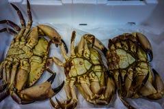 Crabs. Closeup view of iced crabs Stock Photos