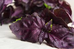 Closeup view of Italian food ingredient - red basil. Over grey background Stock Photography