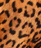 Detail of a jaguar skin Royalty Free Stock Photos