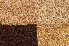 Closeup view of 4 kinds of Malt Grains. Ingredient for beer. Bac. Kground texture. Ideal for commercial. Backdrop image Royalty Free Stock Photos