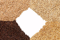 Closeup view of 4 kinds of Malt Grains. Ingredient for beer. Bac. Kground texture. Ideal for commercial. Backdrop image. Empty space for text Stock Photo