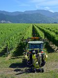Closeup view of Leaf Removal Machine in Sauvignon Blanc Vineyard stock photo