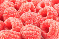 Closeup view of a lot of raspberries (Rubus Idaeus) Stock Images