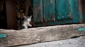 Kitten jumping in super slow motion, loop-ready stock video