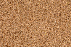 Closeup view of Pale Pilsener Malt Grains. Ingredient for beer. Background texture. Ideal for commercial. Backdrop image Stock Photography