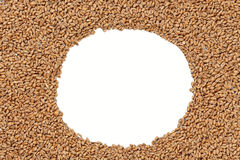 Closeup view of Pale Pilsener Malt Grains. Ingredient for beer. Background texture. Ideal for commercial. Backdrop image. Empty space for text Royalty Free Stock Images