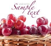 Closeup view of red grape berries Stock Photos