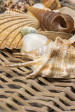 Closeup view of seashells in the used wicker basket. Vertically. Stock Images