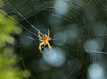 Closeup view of a spider Stock Images