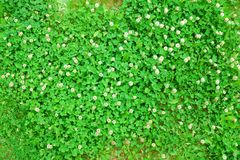 Closeup view of springtime green grass Stock Photography