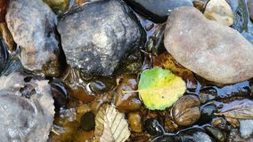 Closeup view of stones and leaves in stream in Mt Mitchell state Park near Marion NC. Closeup View of shallow stream with rocks and leaves along hiking trail in Royalty Free Stock Photos