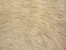 Dog fur texture. Closeup view on the texture of dog fur Royalty Free Stock Image