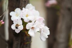 Closeup view of tree branch with tender flowers. Amazing spring blossom. Closeup view of tree branch with tender flowers outdoors. Amazing spring blossom royalty free stock image