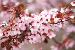 Closeup view of tree branches with tiny flowers outdoors. Amazing spring blossom stock photography