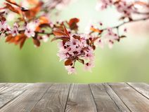 Closeup view of tree branches with tiny flowers outdoors, space for text. Amazing spring blossom royalty free stock photo