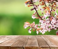 Closeup view of tree branches with tiny flowers outdoors, space for text. Amazing spring blossom royalty free stock photos