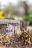 Closeup view of tree trunk on spring morning Royalty Free Stock Image