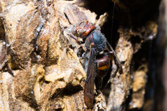 Closeup view of wasps Stock Images