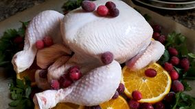 Closeup view of Whole Raw Chicken with Fresh parsley Cranberries and Orange Slices on baking tray tin prepared for Royalty Free Stock Image