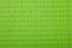 Closeup vivid green sponge background texture pattern Royalty Free Stock Images