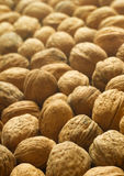 Closeup of  walnuts background. Stock Images