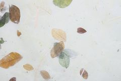 Closeup  washi Royalty Free Stock Photos