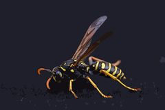 Closeup of a wasp Stock Photo