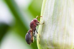 Closeup wasp Royalty Free Stock Image