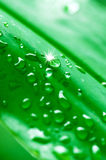 Closeup water drop on green fresh leaf. Background Royalty Free Stock Photos