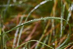 Closeup of water droplets on green grass with blurred backgroundCloseup of water droplets on green grass with blurred background. Closeup of water droplets on stock images